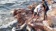 Ayvalık'ta sahile erkek cesedi vurdu