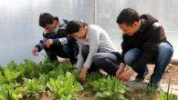 Nevşehir'de Engelliler, Hayata Küsmedi Sera Ürünleri Yetiştiriyorlar
