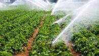 Nevşehir'de Çiftçiye 139 bin 655 lira destekleme ödemesi yapılacak